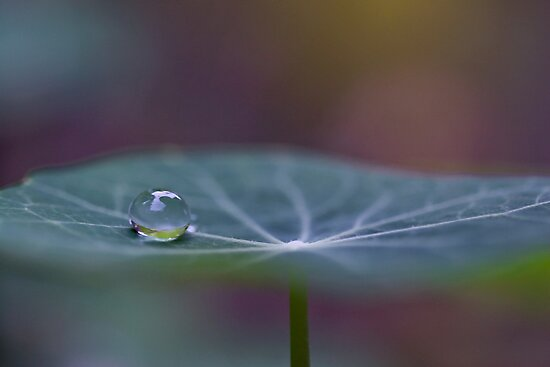 Seeking balance by Maria Ismanah Schulze-Vorberg
