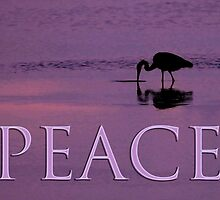 heron feeding peace card by dedmanshootn