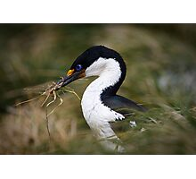Shag in the Grass Photographic Print