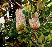 bottle brush? by fazza