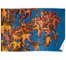 Melbourne's Autumn Colours Poster