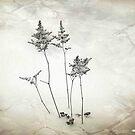 Little Trees © by Dawn M. Becker