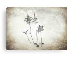 Little Trees © Canvas Print