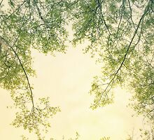 Spring foliage No. 2 by Priska Wettstein