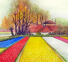 BULB FIELDS AND A DUTCH FARM - AQUAREL by RainbowArt