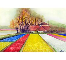 BULB FIELDS AND A DUTCH FARM - AQUAREL Photographic Print