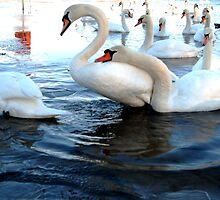 Swan Lake by nadinecreates