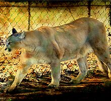 Florida Panther by AuntDot
