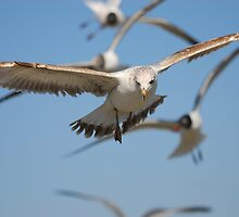 Swooping in For Cornflakes by Lisa McLain