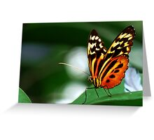 Tiger Longwing Butterfly - Blank Greeting Card  Greeting Card