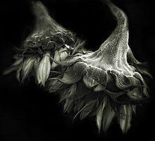 Sunflower Tango by Jessica Jenney