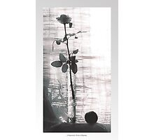 Morning Rose and Peach Photographic Print