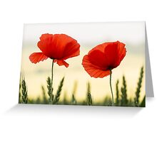 English Field Poppies Greeting Card