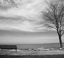 Lake, Tree and Park Bench by Frank Romeo