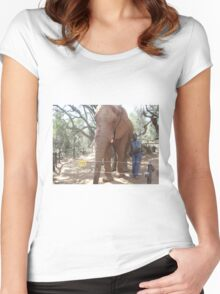 Young Elephant Bull, Gauteng, South Africa Women's Fitted Scoop T-Shirt