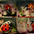 Coccinellidae Collage by missmoneypenny
