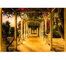Frames and Flowers Photographic Print