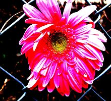 Caught Flower by Iszie B.