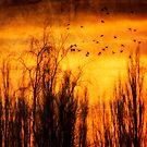 Birds by www.romansolar photography.com