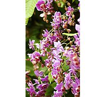 """The Orchid Wall""-Conservatory Orchids Photographic Print"