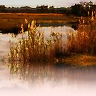 Golden Reeds in the back Bays by Rick  Todaro