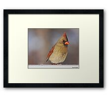 A Female Cardinal Framed Print