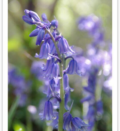 Blue bell flower photograph  Sticker