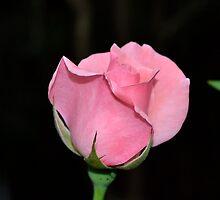 Be my valentine by Phrancis Whiteley