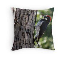 Acorn Woodpecker ~ Male Throw Pillow