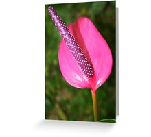Anthurium Hybrid Greeting Card