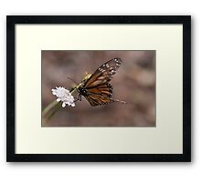 Butterflies & Dragons (minus the Dragons) Framed Print