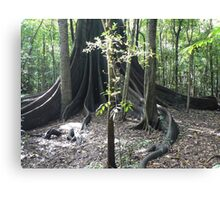 The Forest Giant, Wingham Brush Canvas Print