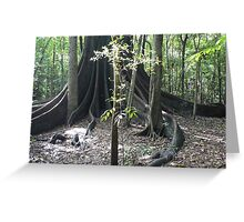 The Forest Giant, Wingham Brush Greeting Card