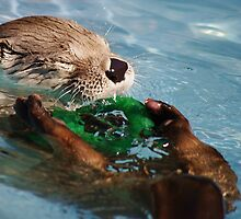 Otter Playtime by Alison M