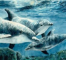 """""""Dolphins - Las Vegas, Nevada"""" by Spenceartist"""