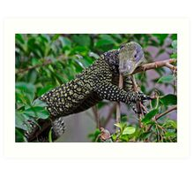 Monitor Lizard Art Print