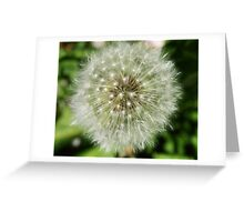 Close up dandelion Greeting Card