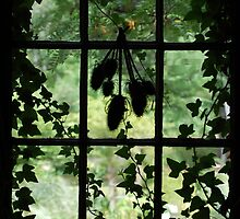 Window with Green the Vines by kristimas