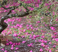 Petals on the Path by Mark German