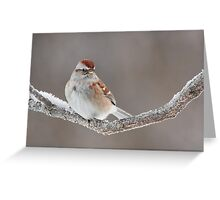 American Tree Sparrow. Greeting Card
