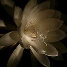 Night Bloomer 1 by beeden