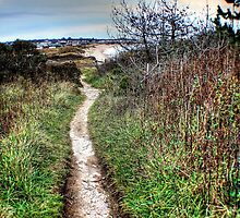 On the Right Path... by laurie13