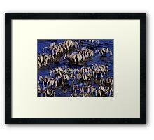 Soldier Crabs Framed Print