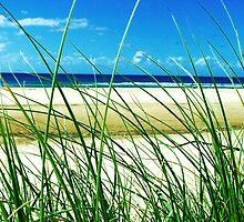 Sea & Seagrass - Byron Bay, NSW, Australia by Monique Barber