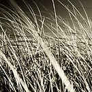 Blades by Tim Mannle