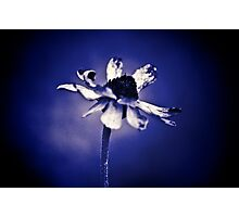 Love is Blue, is it? Photographic Print