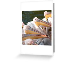 Pelicans... Greeting Card