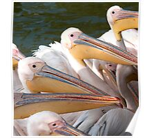 Pelicans... Poster