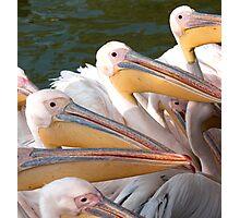 Pelicans... Photographic Print