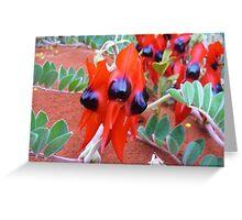 Sturts Desert Pea Greeting Card